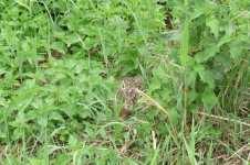 Schovaný zajíček, červen 2008