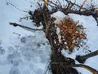 Kompost v zimě, Soběšice, březen 2009