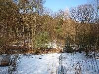 Magický strom na zahradě vypadá jako plamen, Soběšice, březen 2009