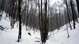 Mrtvá rokle, Soběšice, leden 2009