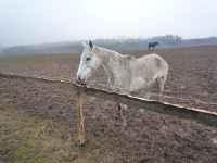 Narozeninový kůň, Soběšice, 15.3.2009