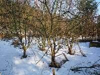 Stromy v zimě, Soběšice, březen 2009
