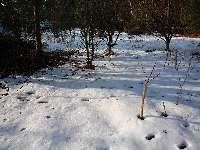 Stromy v zahradě, Soběšice, březen 2009