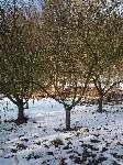 Zima v zahradě, Soběšice, březen 2009