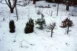 Bonsaje a sníh v zimě