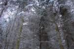 Smrkové koruny se sněhem