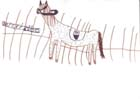 Obrázek z výstavy z 30.10.2003 na Radikále
