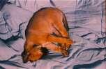 Obrázek z výstavy z 27.11.2003 na Radikále